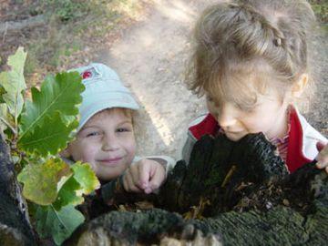 Zwei Kinder im Vorschulalter schauen in einen hohlen Eichenstamm