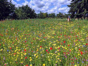 Blumenwiese, Foto: Elfi Umlauf