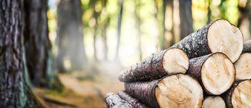 Waldweg mit gelagerten Baumstämmen