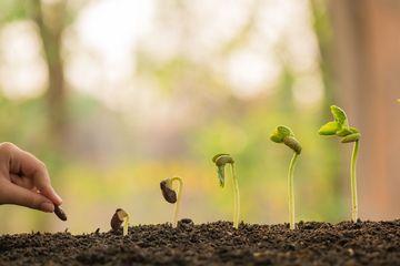 Hand, die eine grüne Pflanze über Beleuchtungshintergrund hält und pflegt, Baum, Umwelt, Hintergrund pflanzt. Landwirtschaft, Gartenbau. Pflanzenwachstumsentwicklung vom Samen zum Bäumchen.