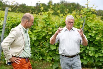 Besuch des Weingutes Zahn - Staatssekretär Weil im Gespräch mit einer Person, im Hintergrund Weinreben
