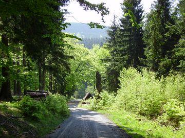 Waldweg mit Fernblick
