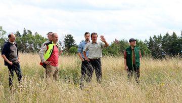 Staatssekretär Torsten Weil steht mit mehreren Forst-Experten im hohen Gras einer Wiese mit Wildkräutern..