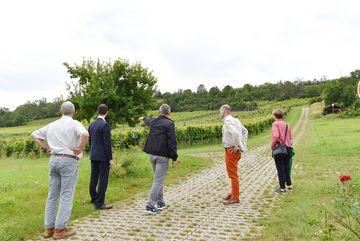 Besuch des Weingutes Zahn - Staatssekretär Weil bei der Besichtigung eines leicht ansteigenden Weinberges, alle Personen blicken Richtung Weinberg, eine Person zeigt mit erhobenen Arm Richtung Weinberg