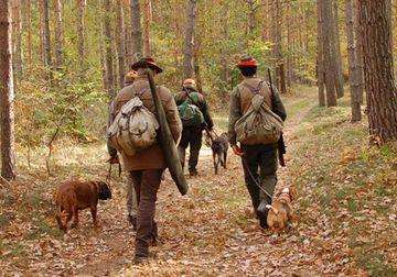 Vier Männer laufen mit ihren Hunden durch einen Herbstwald