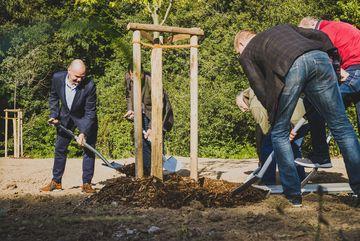 Staatssekretär Torsten Weil pflanzt eine Linde