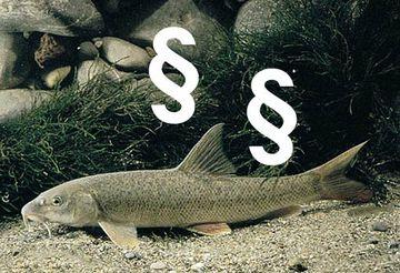 Dieses Bild zeigt einen Fisch; in das Bild sind Paragraphenzeichen integriert.
