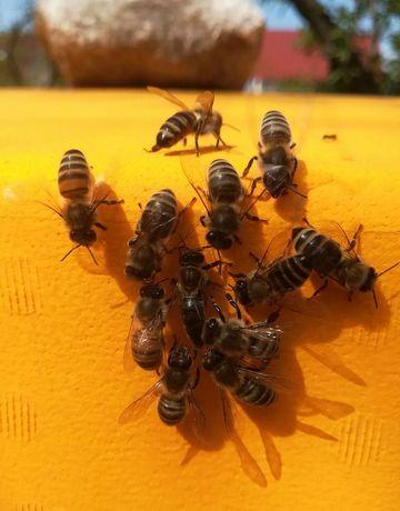 Honigbienen, Foto: Sebastian Beringer